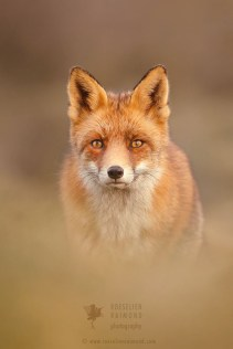 That Foxy Face