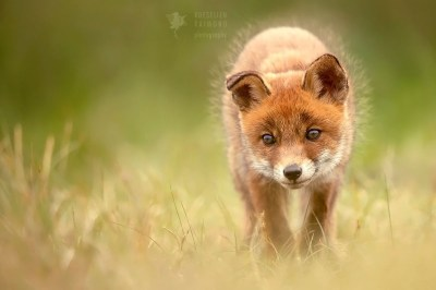 Baby Animals Roeselien Raimond Nature Photography