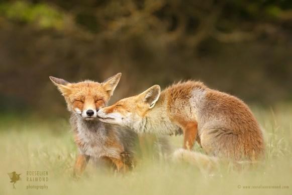 animal affection