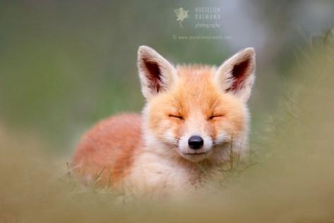 Baby zen fox