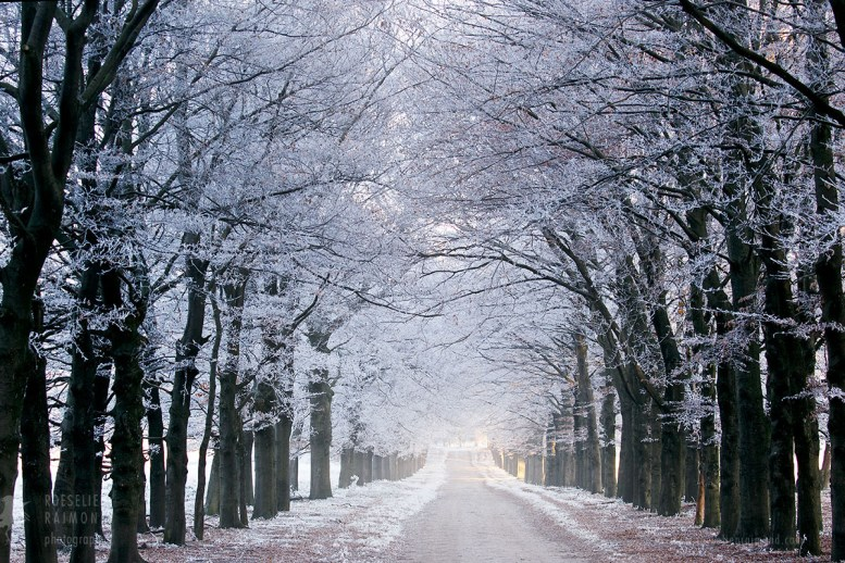 snow lane in the winter