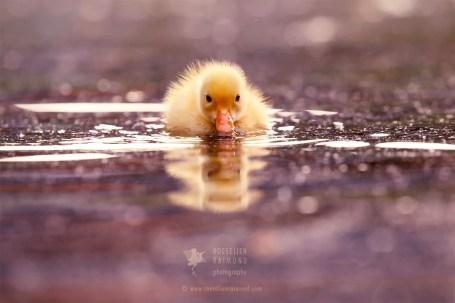 Bath Duck