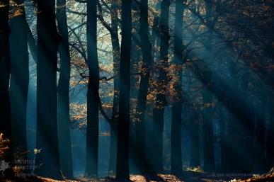 Light rays through trees