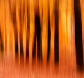 Orange autumn forest