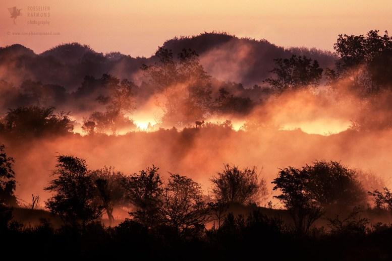 dunes in the mist