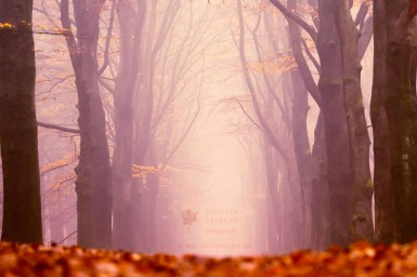 Autumn Forest in the Mist