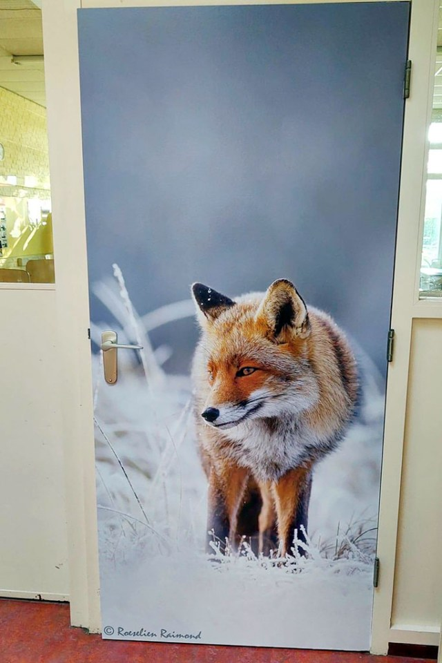 Fox on a school door