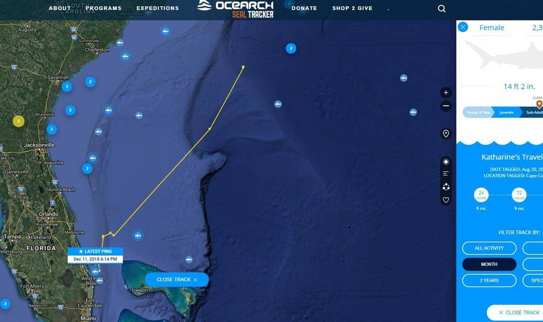 Tracking Three Tagged Great White Sharks off Florida's Coast