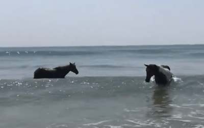 Horses at the Beach!