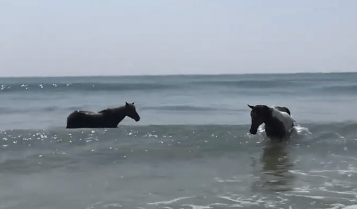 Horses at the Beach!