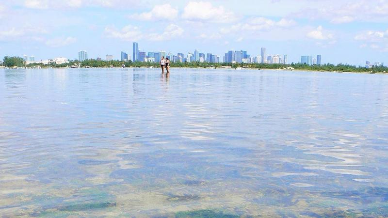Biscayne Bay Is In Danger Of A 'Regime Shift,' NOAA Study Finds