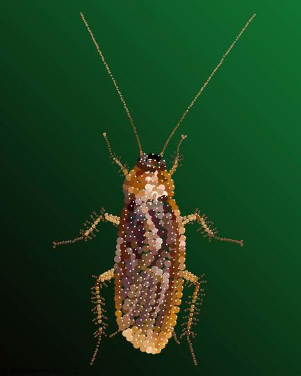 Bedazzled Cockroach