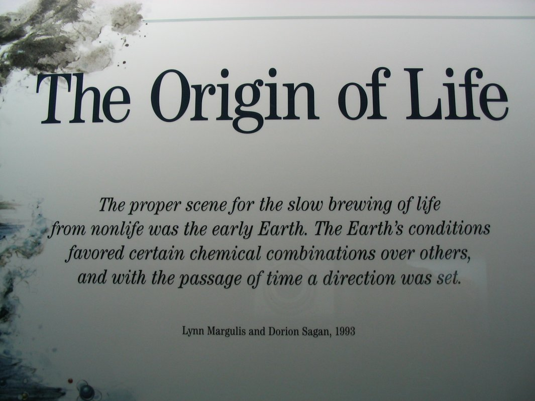 Image result for what is life (within science), what is the origin of life