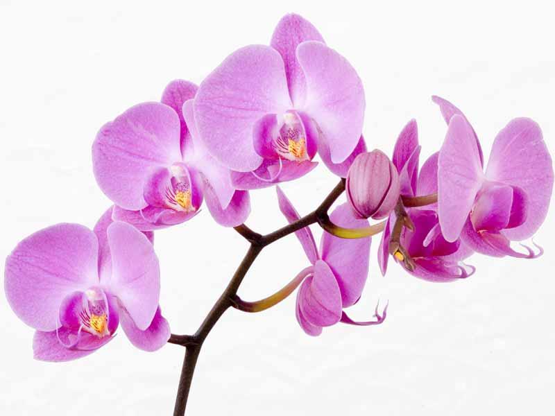 https://i2.wp.com/www.rogradini.ro/wp-content/uploads/2013/03/poze-imagini-flori-orhidee_08.jpg
