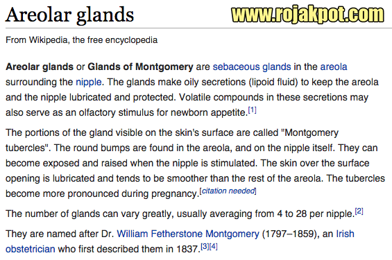 The Wikipedia entry on areolar glands