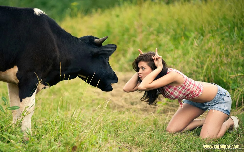 See? Cows are not violent creatures... :D