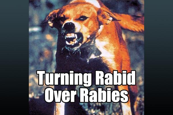 Turning Rabid Over Rabies - The Rojak Pot