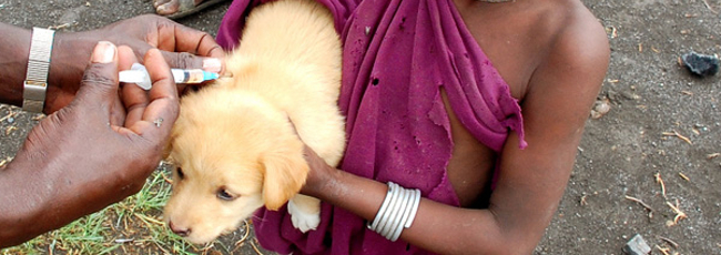 Canine rabies vaccination in Tanzania