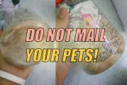 Why You Should Never Buy Your Pets Online