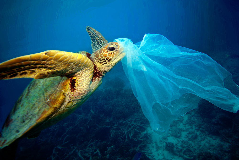 Turtle eating plastic bag