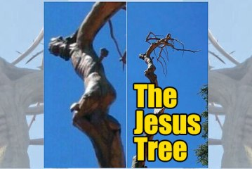 The Famous Jesus Tree Of Lebanon Miracle Explained!