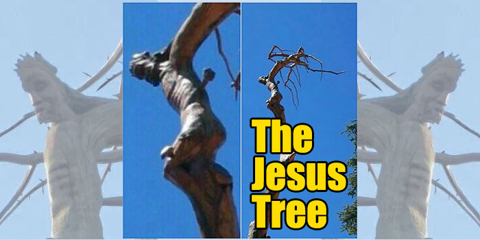The Jesus Tree Of Lebanon Miracle Explained!