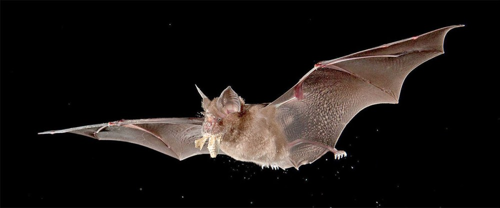 Bats not snakes most likely responsible for Wuhan coronavirus