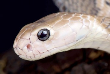 Stop Blaming Snakes For The Wuhan Coronavirus!