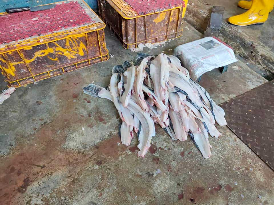 Disgusting Fish Processing Plant In Kepong Shut Down!