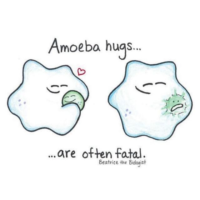 Crtice iz života: Deoba jedne amebe