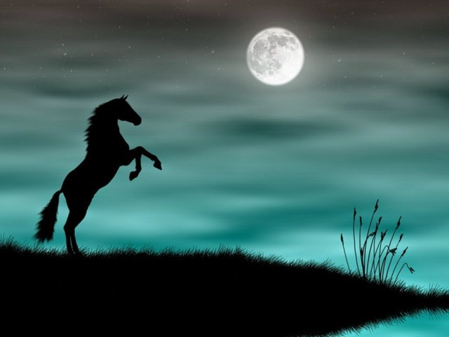 black-horse-backgrounds