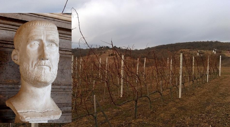 Moja fruškogorska priča (blog izazov hotela Park, Ruma): Kako je vino poteklo Sremom