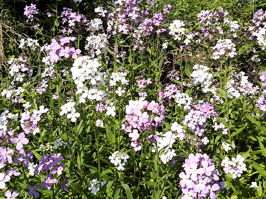 Flowers by the path