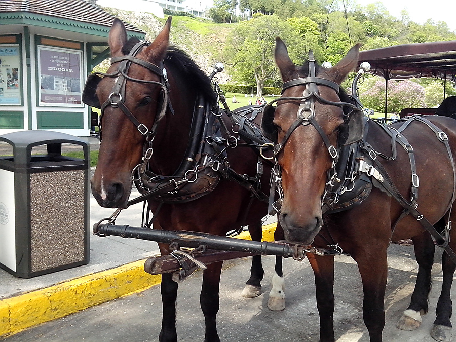 Serving the carriage trade at $135/hr for up to 5 people
