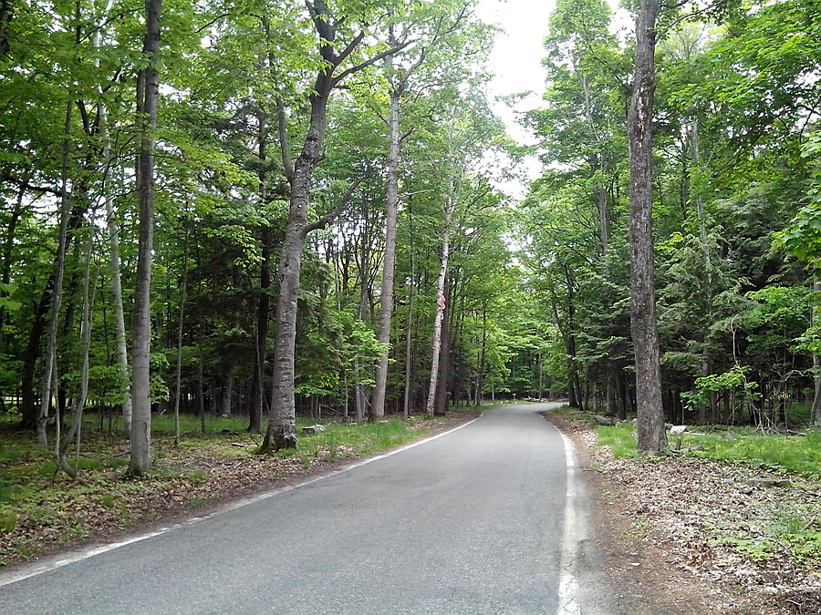 Tunnel of Trees, on Hwy 119