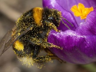 10 easy things you can do in your garden to help bees