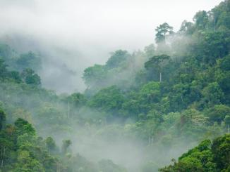 Long-term fate tropical forests not dire