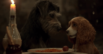 'Lady and the Tramp': See First Trailer for Disney+ Live-Action Remake