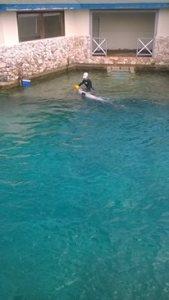 Haai voederen in Curaçao