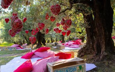 Picnic sotto gli ulivi: cena, cestini e cuscini