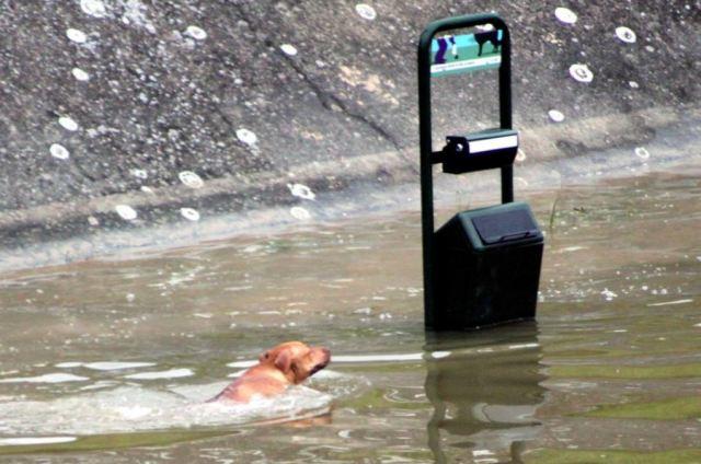 Chien nageant dans la Seine