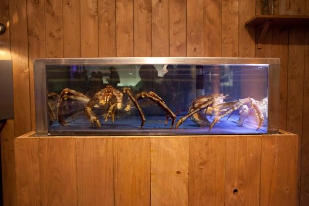 Crabes Royal de Norvège