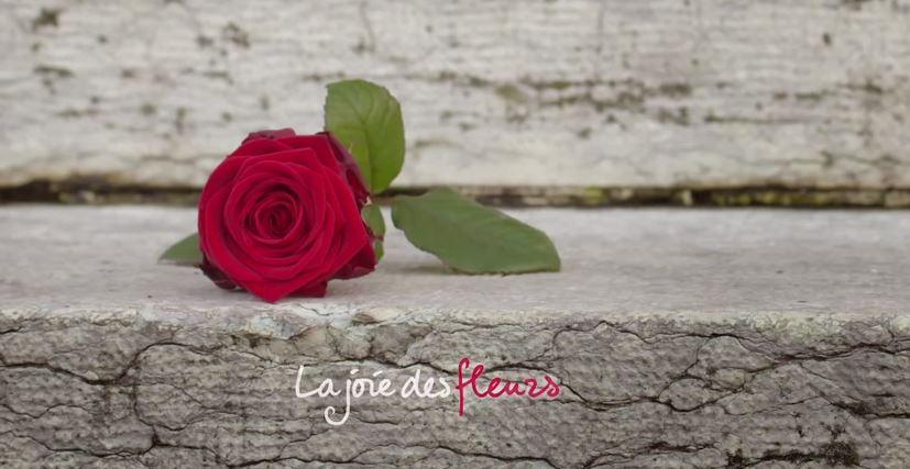 Saint,Valentin , Des roses rouges offertes aux passant par