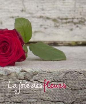 La joie des fleurs à la saint valentin, des roses rouges offertes aux passants à Vérone
