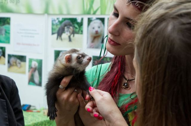 NAC - Salon Animal Expo