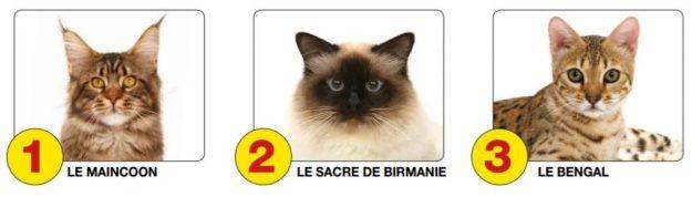 TOP 3 des chats préférés en France