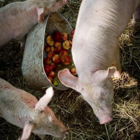 New Arrivals: Ham, Ham and Jumpies, 2013