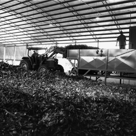 Tractor and Erva Leaves, 2000. Gelatin silver print, 16x20