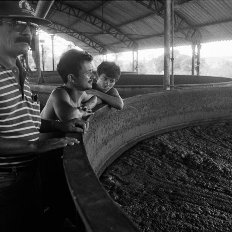 João, Clésio and Adagilson, 1992