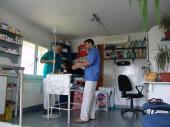 Cabinetele-veterinare-din-Olt-în-colaps
